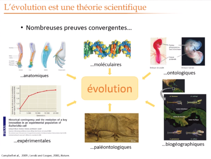 Evolution Theorie Sci