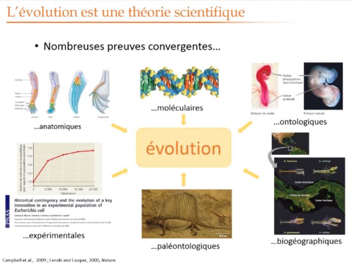 Evolution Theorie Sci