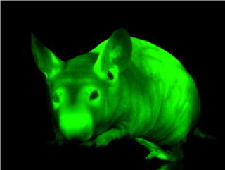 souris verte - vert fluo